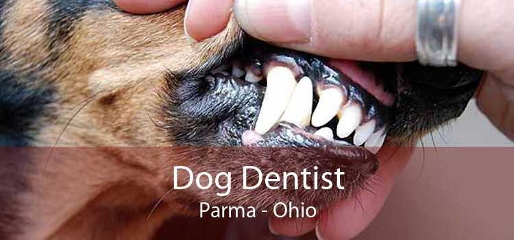 Dog Dentist Parma - Ohio