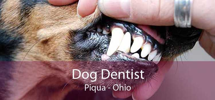 Dog Dentist Piqua - Ohio