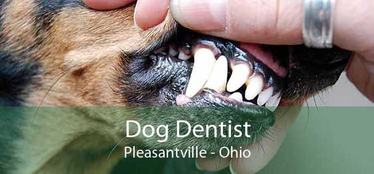 Dog Dentist Pleasantville - Ohio