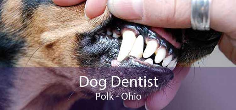 Dog Dentist Polk - Ohio