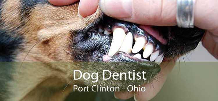 Dog Dentist Port Clinton - Ohio