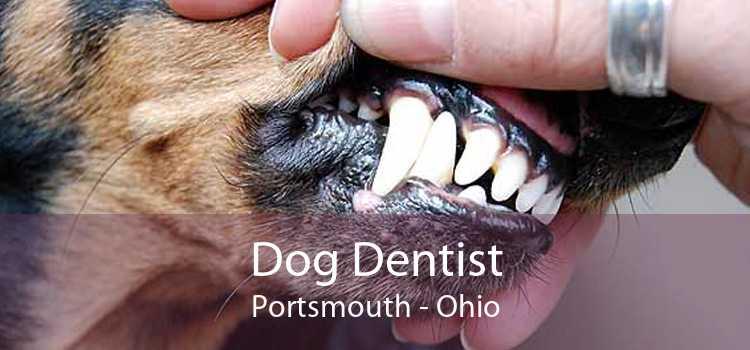 Dog Dentist Portsmouth - Ohio