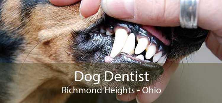 Dog Dentist Richmond Heights - Ohio