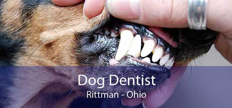 Dog Dentist Rittman - Ohio