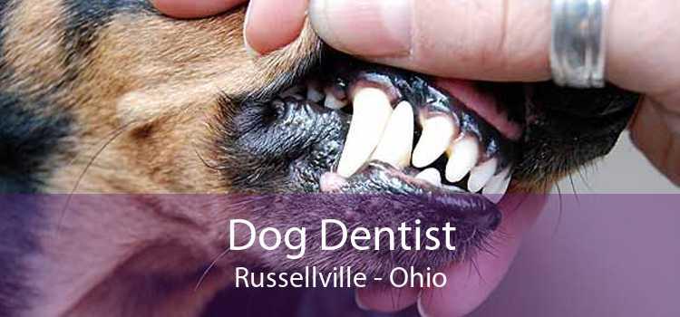 Dog Dentist Russellville - Ohio