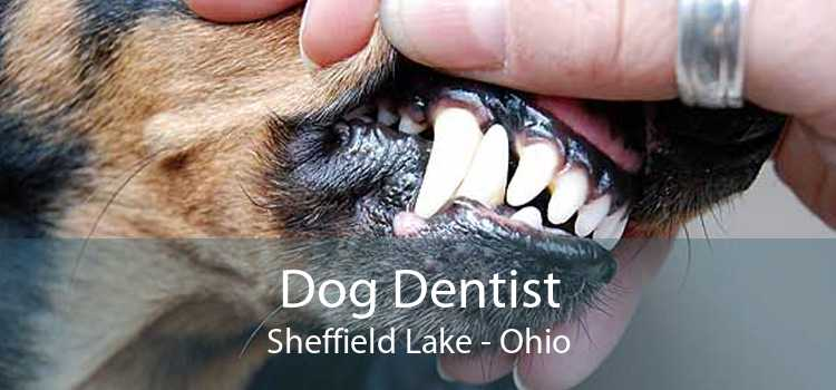 Dog Dentist Sheffield Lake - Ohio