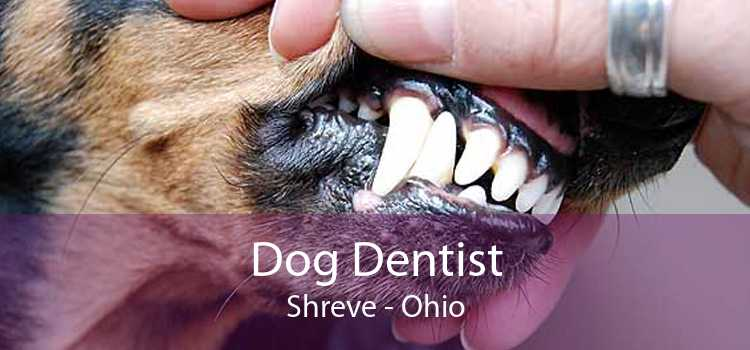 Dog Dentist Shreve - Ohio