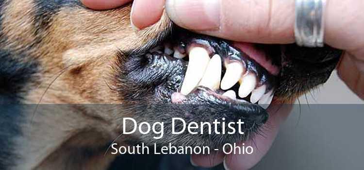 Dog Dentist South Lebanon - Ohio