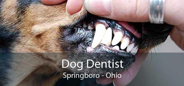 Dog Dentist Springboro - Ohio