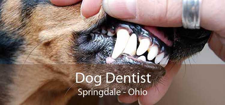 Dog Dentist Springdale - Ohio