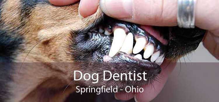 Dog Dentist Springfield - Ohio