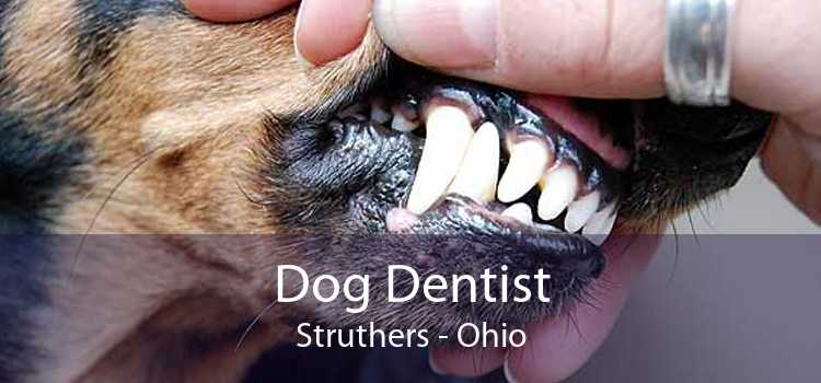 Dog Dentist Struthers - Ohio