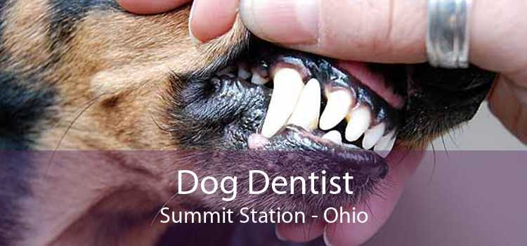 Dog Dentist Summit Station - Ohio
