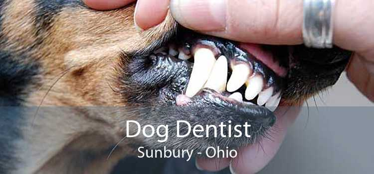 Dog Dentist Sunbury - Ohio