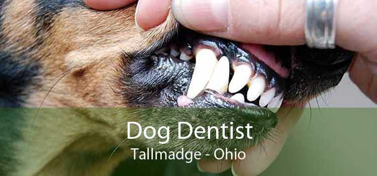 Dog Dentist Tallmadge - Ohio