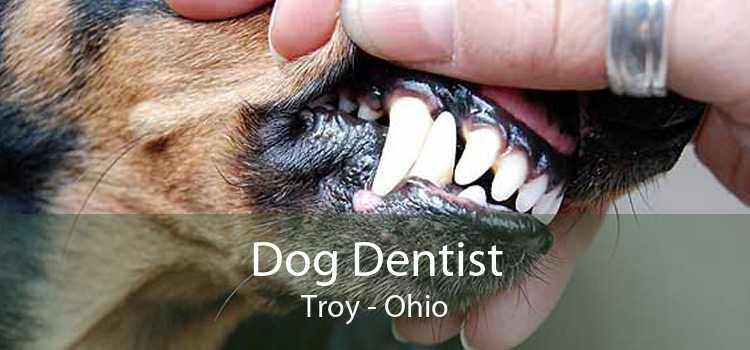Dog Dentist Troy - Ohio