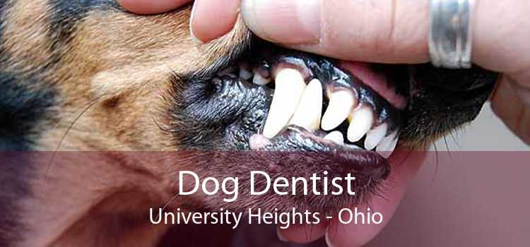 Dog Dentist University Heights - Ohio