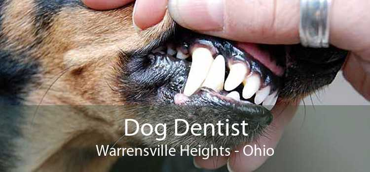 Dog Dentist Warrensville Heights - Ohio