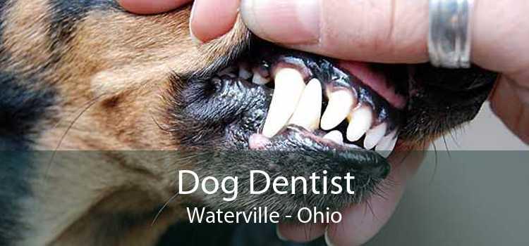 Dog Dentist Waterville - Ohio