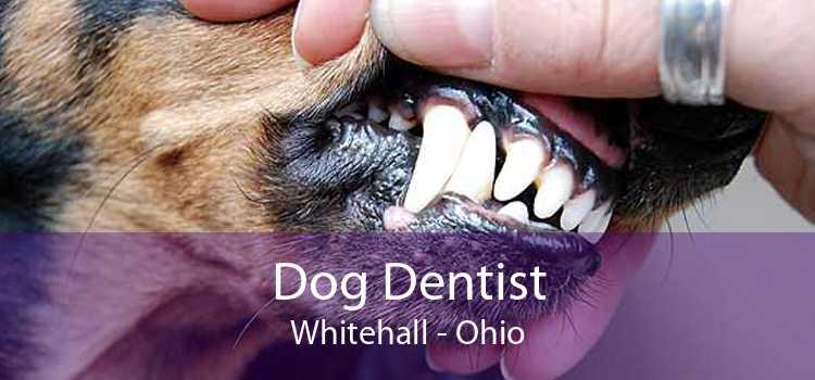Dog Dentist Whitehall - Ohio