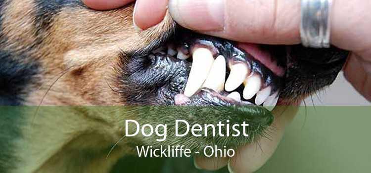Dog Dentist Wickliffe - Ohio