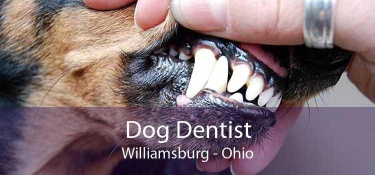 Dog Dentist Williamsburg - Ohio