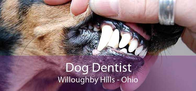 Dog Dentist Willoughby Hills - Ohio