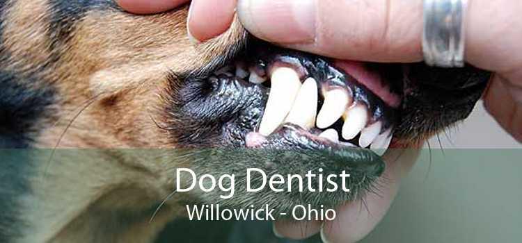 Dog Dentist Willowick - Ohio