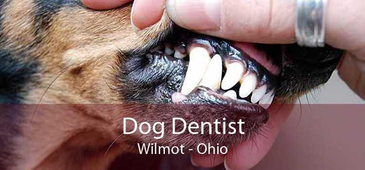 Dog Dentist Wilmot - Ohio