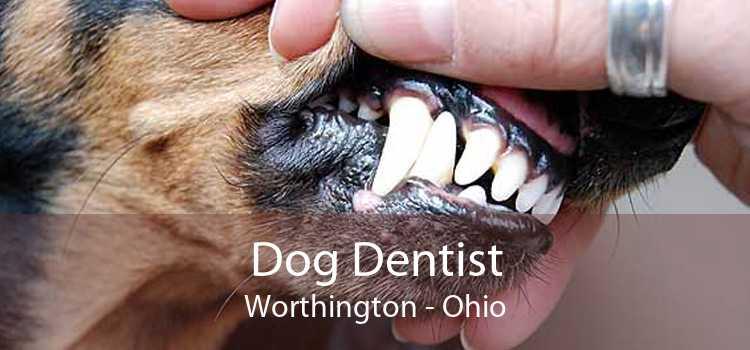 Dog Dentist Worthington - Ohio