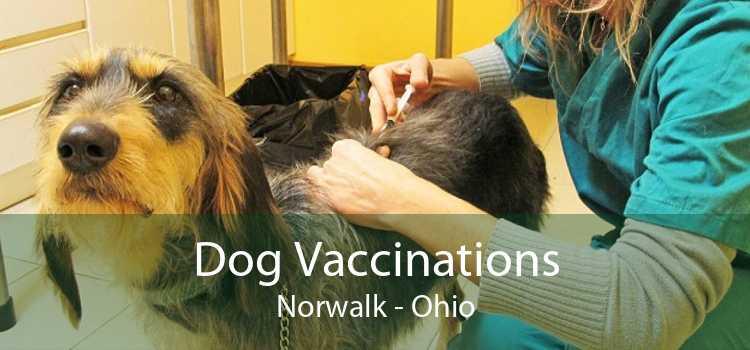 Dog Vaccinations Norwalk - Ohio