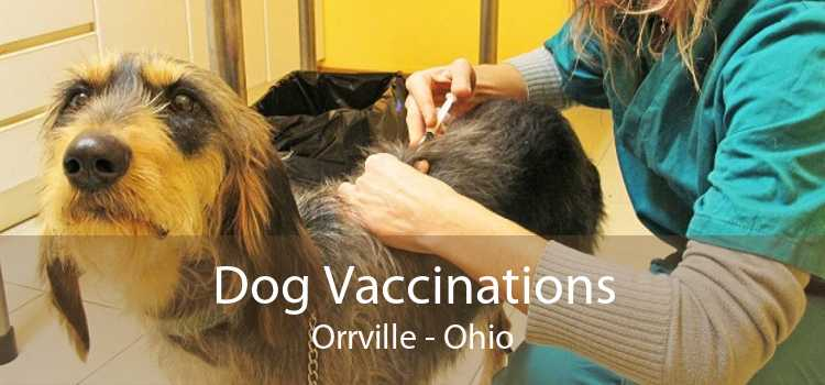 Dog Vaccinations Orrville - Ohio