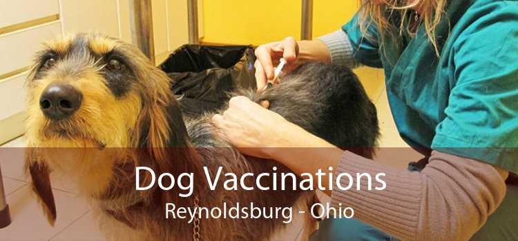 Dog Vaccinations Reynoldsburg - Ohio