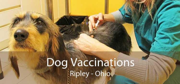 Dog Vaccinations Ripley - Ohio