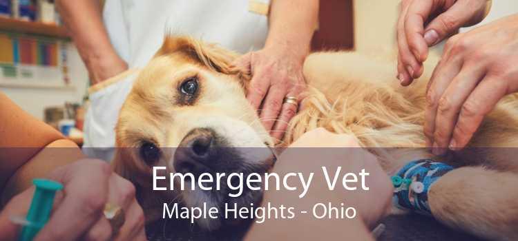 Emergency Vet Maple Heights - Ohio
