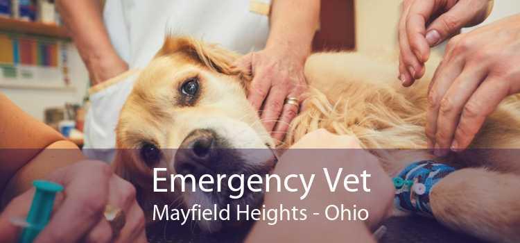 Emergency Vet Mayfield Heights - Ohio