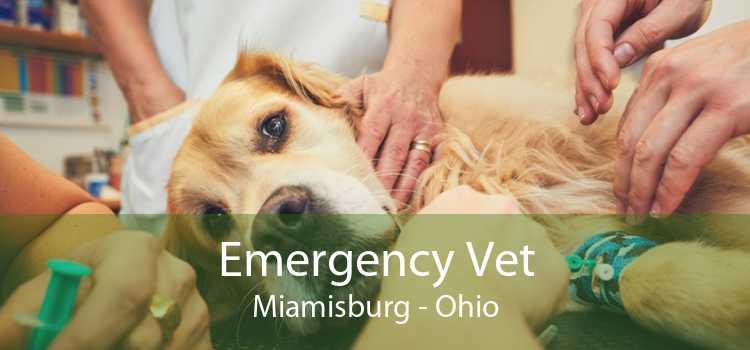 Emergency Vet Miamisburg - Ohio