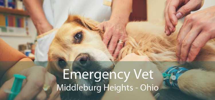 Emergency Vet Middleburg Heights - Ohio