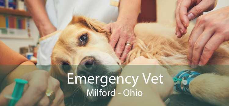 Emergency Vet Milford - Ohio