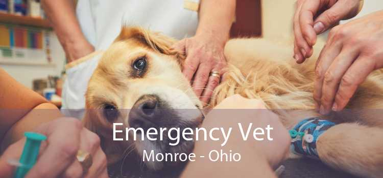 Emergency Vet Monroe - Ohio