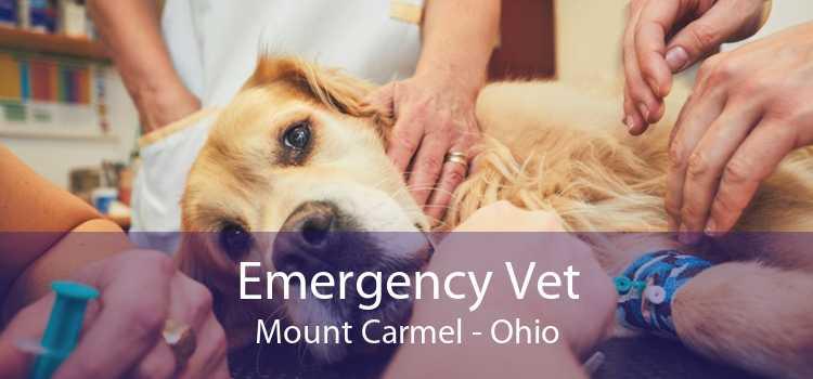 Emergency Vet Mount Carmel - Ohio