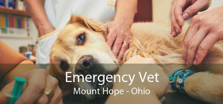 Emergency Vet Mount Hope - Ohio