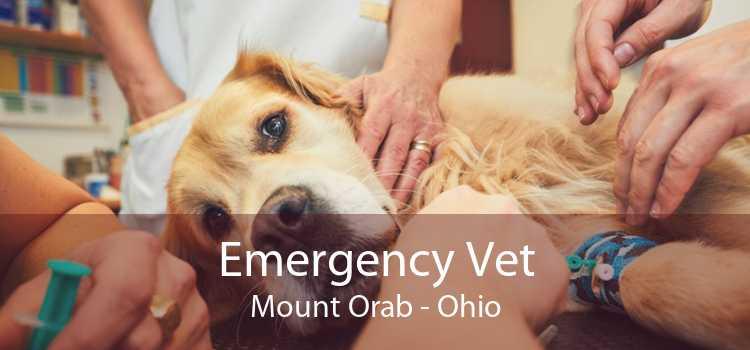 Emergency Vet Mount Orab - Ohio