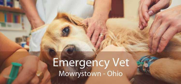 Emergency Vet Mowrystown - Ohio