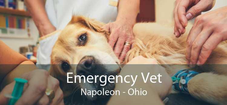 Emergency Vet Napoleon - Ohio