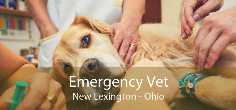 Emergency Vet New Lexington - Ohio