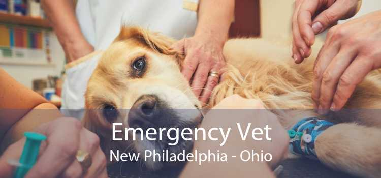 Emergency Vet New Philadelphia - Ohio