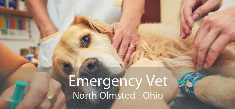 Emergency Vet North Olmsted - Ohio