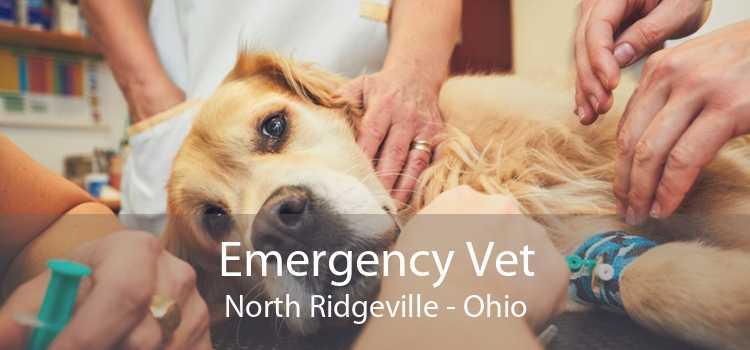Emergency Vet North Ridgeville - Ohio