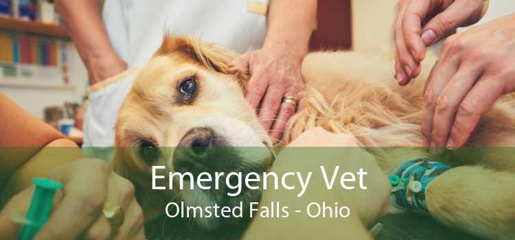Emergency Vet Olmsted Falls - Ohio